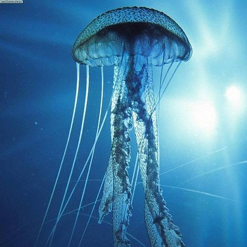 medusa-4--490x490