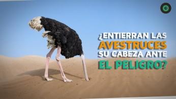 avestruzcabezaentierra20190123